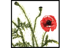 Detail Of Poppies