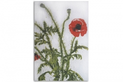 Poppies (on Canvas)